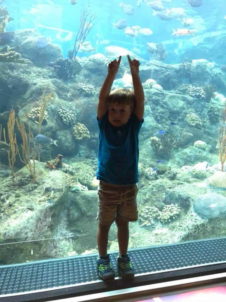 Boy standing in front of aquarium exhibit