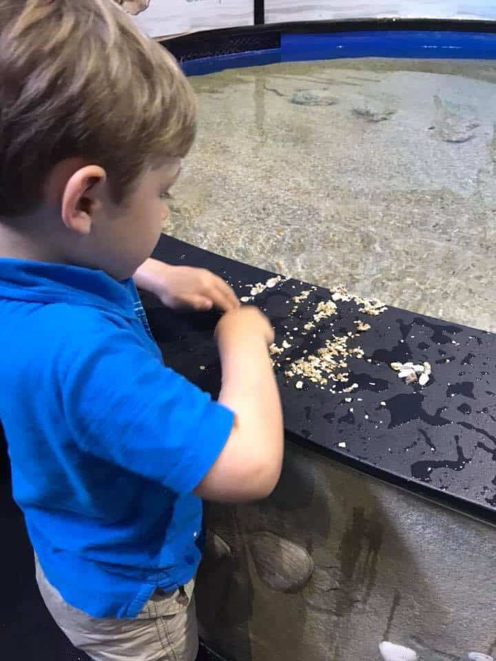 Boy sifting through sand to find treasures