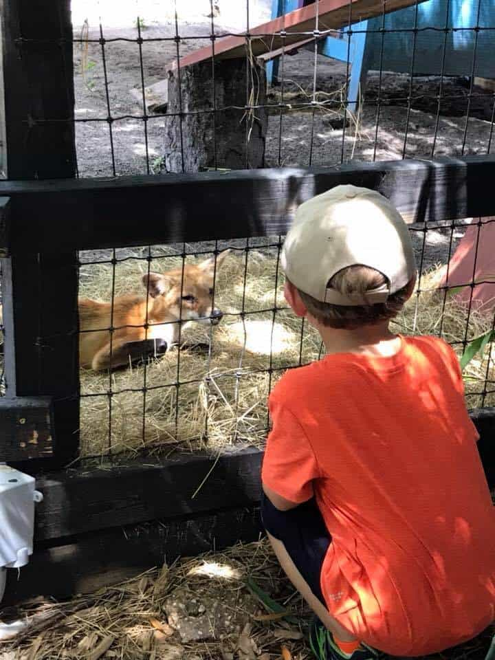 boy sitting next to fox enclosure