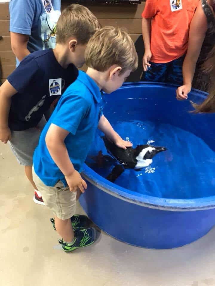 Boy petting a swimming penguin
