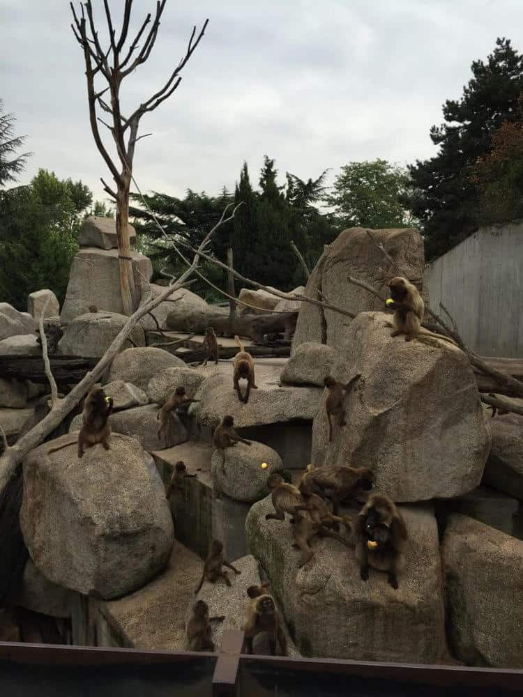 wilhelma zoo, Stuttgart