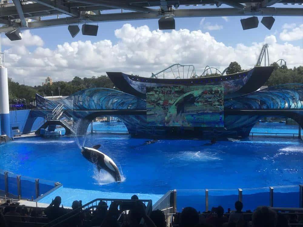 Seaworld Orlando Florida Shamu