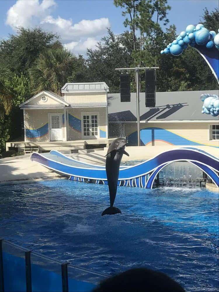 Seaworld Orlando Florida Dolphin Show