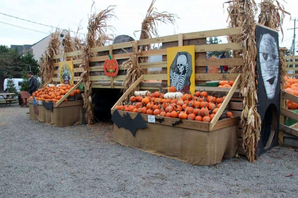 Nalls Produce pumpkin climbing display