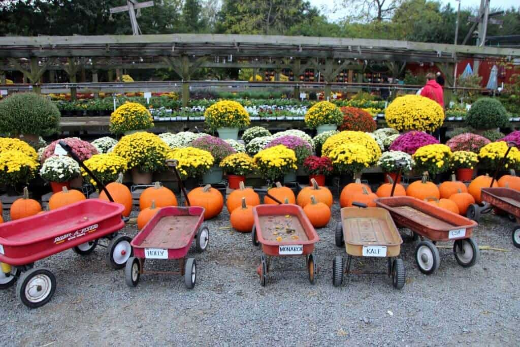 Nalls Produce wagons to use