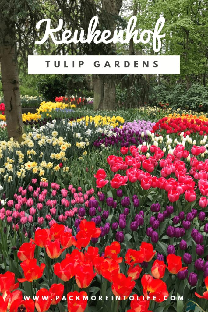 Keukenhof Tulip Gardens Holland
