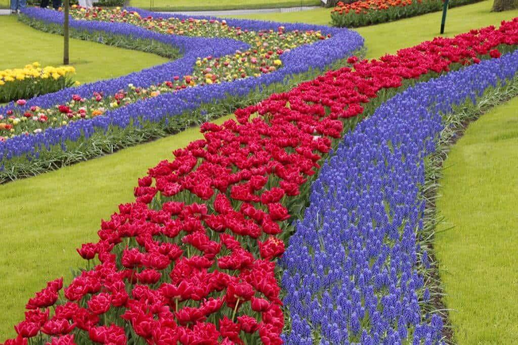 Keukenhof Tulip Gardens Netherlands