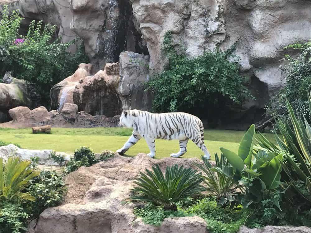 Loco Parque Animals in Tenerife Spain