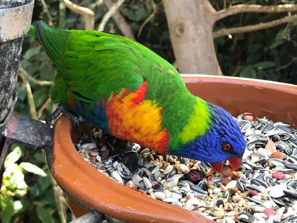 Loro Parque, Puerto de La Cruz, Tenerife Spain Parrot